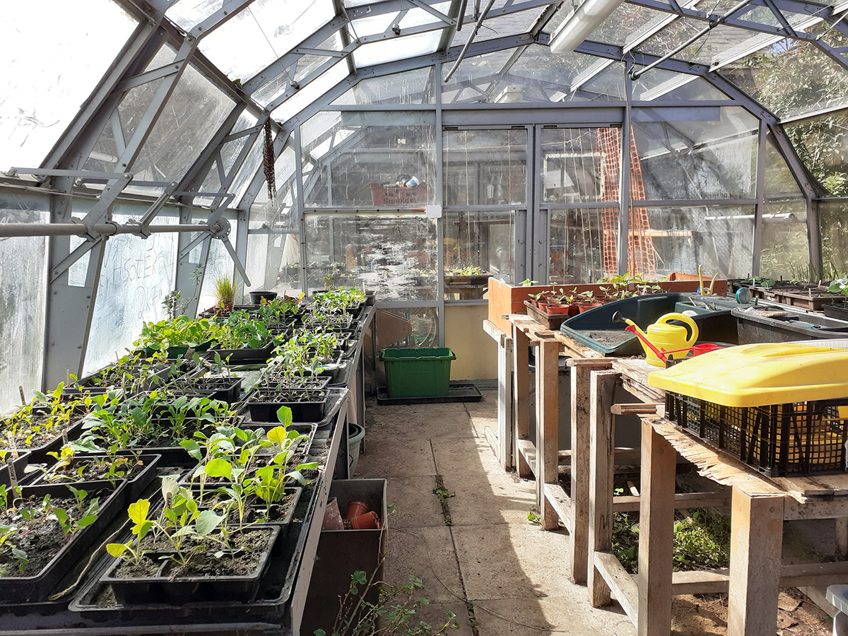 School greenhouse May 2020